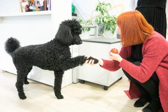 Gyvūnai darbe