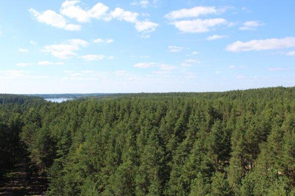 Besipiktinantys dėl miškų kirtimo tai daro per vėlai: ką iš tiesų gali visuomenė?