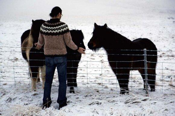 Islandijos arkliai yra labai smalsūs ir draugiški