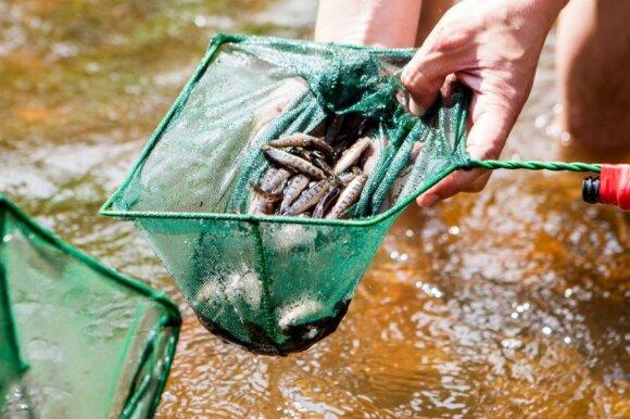 Lietuvoje lašišų ir šlakių ištekliai atkuriami dirbtinai, todėl neplanuojama intensyvinti jų žvejybos