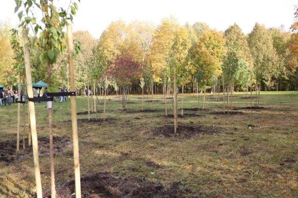 Šiaulius papuoš sakurų sodas: pasodinta 30 medelių