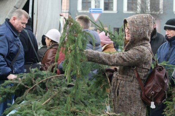Susilaukusios vaikų žinomos šeimos ieško neįprastų Kalėdų eglių
