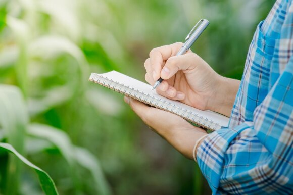 Nedidelis sodas: vaismedžių komponavimo ypatybės