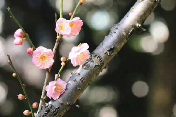 Japoniško sodo dizaino principai