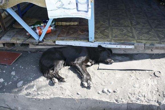 Į Urekio paplūdimius pasikrauti magnetinio smėlio energijos atklysta ir benamių šuniukų, ir...