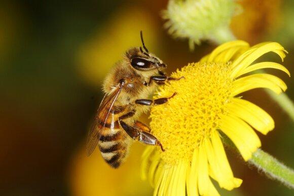 Vabzdžių įgėlimai: kada tai mirtina ir kokiais atvejais nedelsti vykti į ligoninę