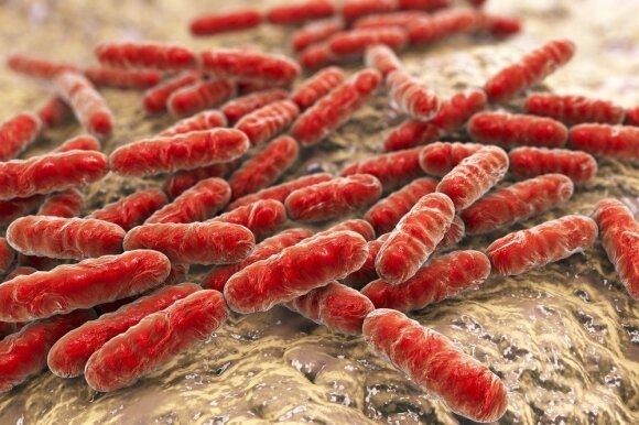 Kiek daug gali probiotikai: gastroenterologė pateikia net 13 būklių, kurias gali gydyti gerosios bakterijos