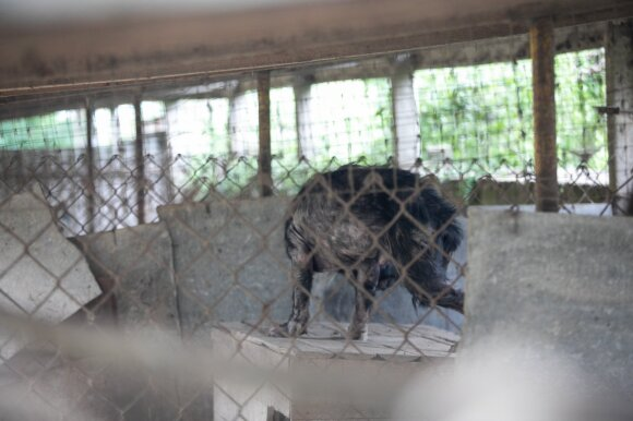 Gyvūnų daugykla Širvintose