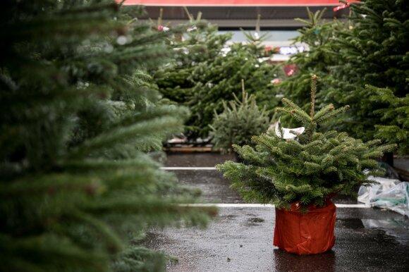 Jau aišku, kiek mokėsime už Kalėdų eglutes: kas atpigo, o už ką paklosime daugiau?