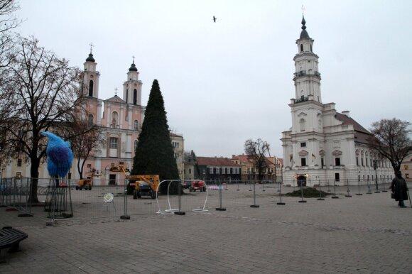 Kauno rotušės aikštėje montuojama Kalėdų eglė