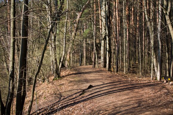 Klimato kaita keičia Lietuvos mišką: žiemą dygsta grybai, bunda barsukai, atklysta šakalai