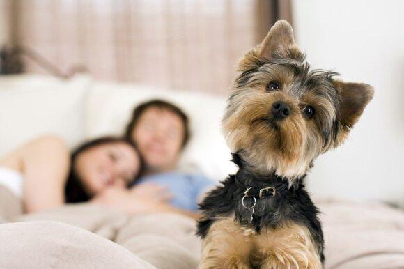 7 miegamojo įpročiai, kurie gali sugadinti jūsų seksualinį gyvenimą
