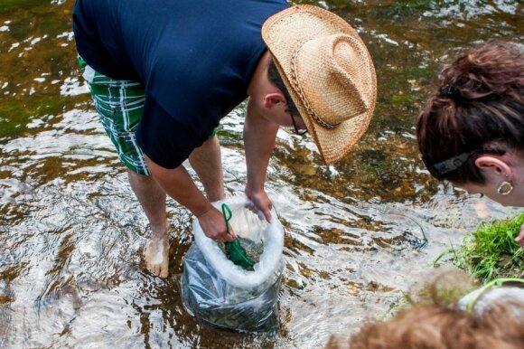 Meškeriotojai mano, kad lašišos specialiai veisiamos ne tam, kad žvejai verslininkai jas gaudytų tinklais