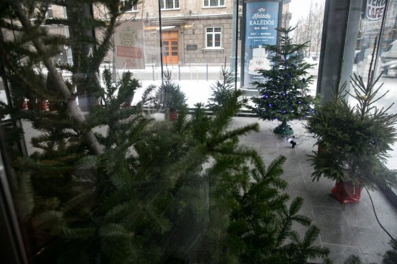 Kur dingsta neparduotos kalėdinės eglutės?