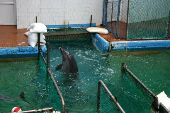 Senasis delfinariumas ir delfinų laikymo vieta