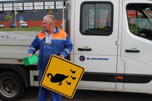 Klaipėdos vairuotojai perspėjami apie gulbes kelyje