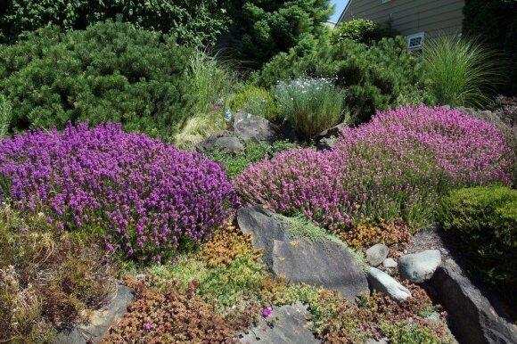 Kaip teisingai pasirinkti augalus alpinariumui