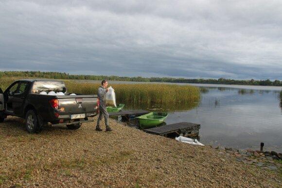 Plinkšių ežero įžuvinimas