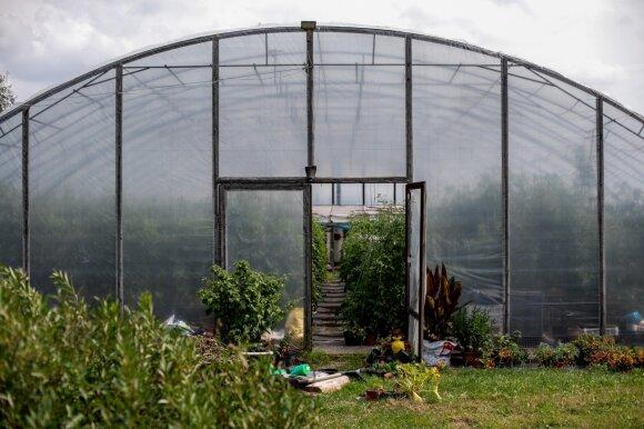 Prienų rajone – įspūdingas nuosavas pomidorų ūkis: augina kelis šimtus skirtingų jų veislių