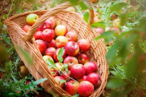 Gudrybės, kaip ilgiau išsaugoti daržoves šviežias ir sutaupyti pinigų