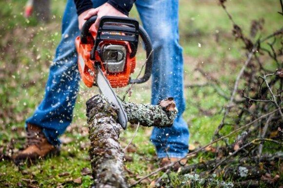Gamtininkų neramina Lietuvos miško kirtimo tendencijos