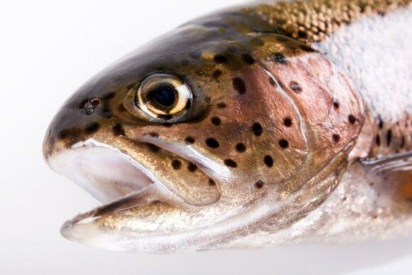 Vandens temperatūra: kaip ji veikia žuvis ir ką reikia žinoti