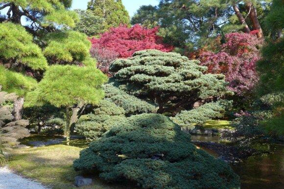 Pasivaikščiojimas po Kioto parką