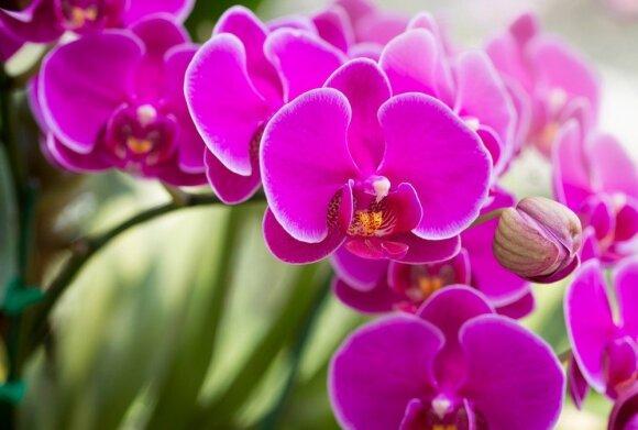 11 atsparių kambarinių augalų tiems, kas daug keliauja arba pamiršta palaistyti gėles