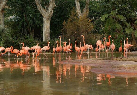Barselonos zoologijos sodas