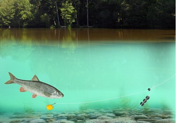 Schema. Judri dugninės sistemėlė upėje