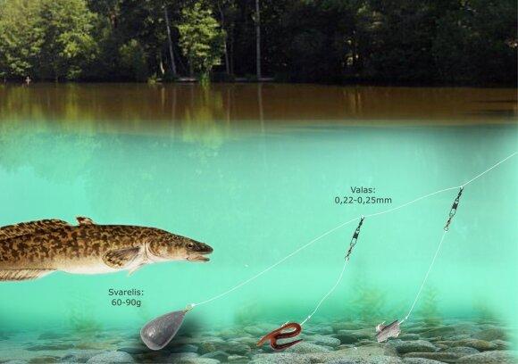 Schema. Vėgėlių žvejyba