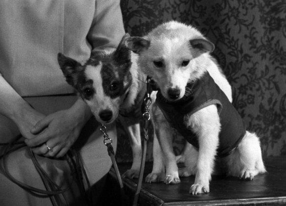 Belka ir Strelka (1960 m.)