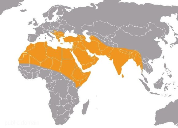 Šakalų paplitimo arealas (CC-SA)
