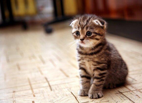 Problemos, kurias sukelia katės: kaip jas spręsti