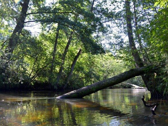 Dzūkijos upeliuose apstu įvairių natūralių kliuvinių - nuo to šiek tiek apsaugo vienšakis masalo kabliukas