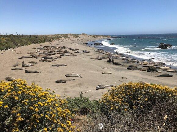 Svildamas Kalifornijos saulėje A. Užkalnis pajuto norą balsuoti už valstiečius