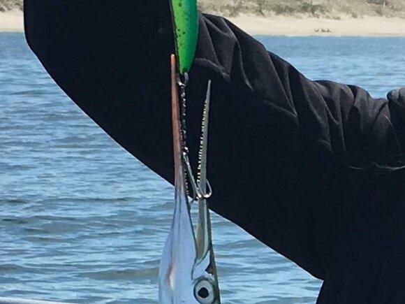 Vėjažuvė sugauta blize su kabliuku ant grandinėlės