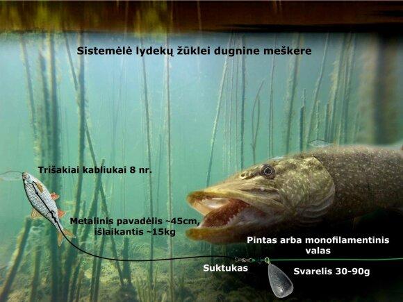 Schema. Lydekų žūklė dugnine meškere