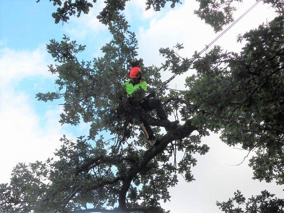 Ieškantiems adrenalino ir gamtos – dar neatrasta profesija medžiuose