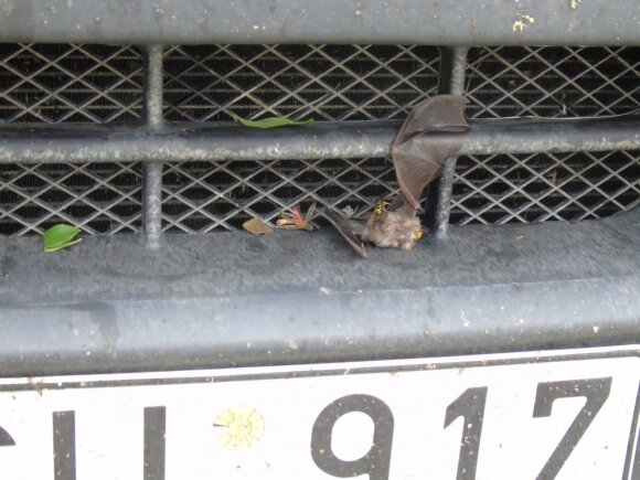 Vievis-Taškentas: Turkiškas šikšnosparnis radiatoriuje ir Donaldo žinutė. V dalis