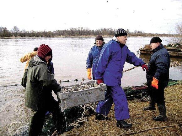 Rekordinė stintų žvejyba 2012 metais