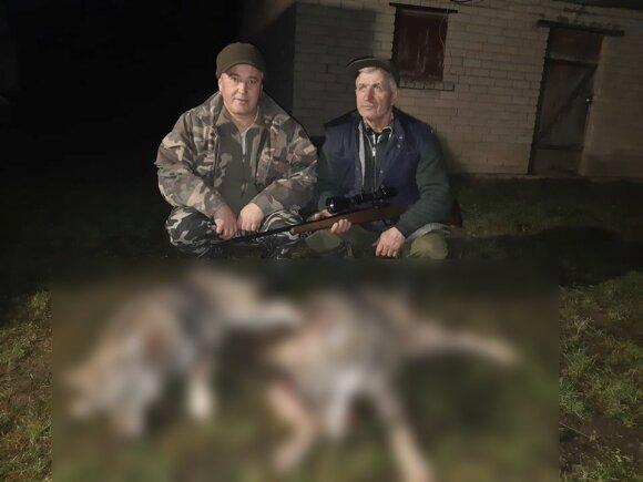 Kai medžiotojas nušovė du vilkus – vilkė atėjo atsisveikinti su žuvusiais jaunikliais