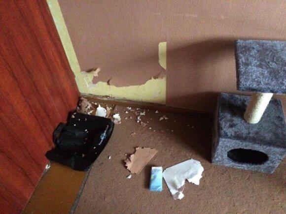 Katė nudraskė tapetus