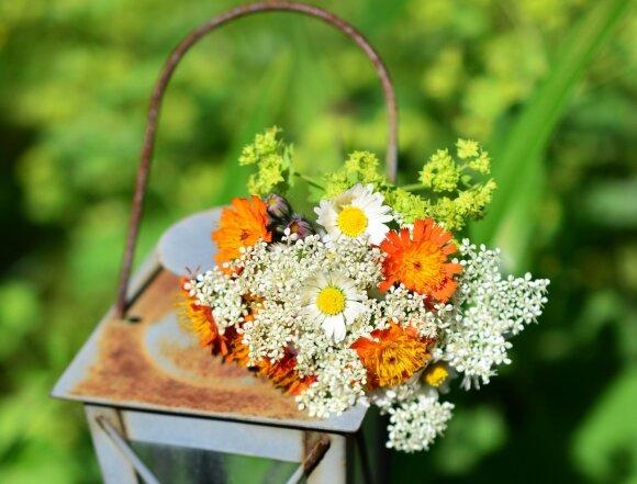 Žolinės – rizikinga šventė alergiškiems gyventojams: pasakė, kokie augalai gali rimtai pakenkti