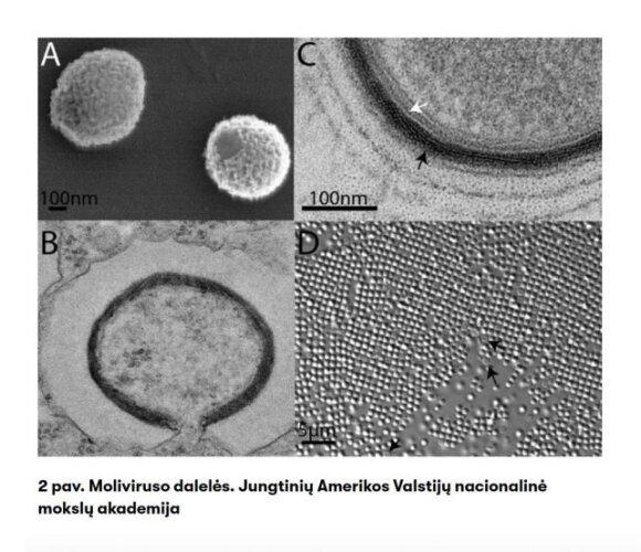 Tirpstančiuose ledynuose – įšalę virusai: kokios pandemijos laukia ateityje?