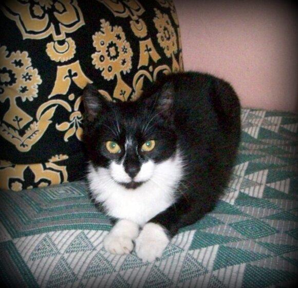 Ieškome namų arba globos jaukiam ir meiliam katinėliui