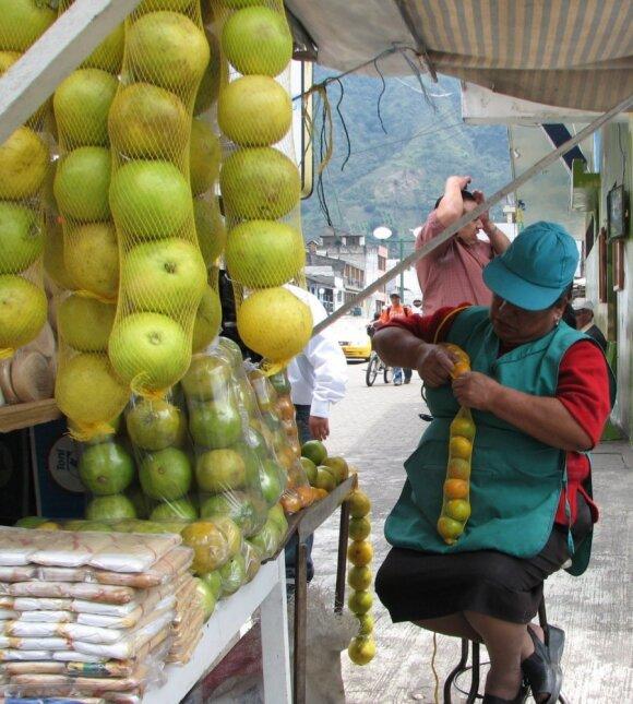 Nežiūrint, kad citrusiniai vaismedžiai yra ne vietiniai, o atvežtiniai iš vakarinės Azijos kraštų, šiuo metu daug apelsinų augina ir Pietų Amerikoje / Prof. J. R. Stonio nuotr.