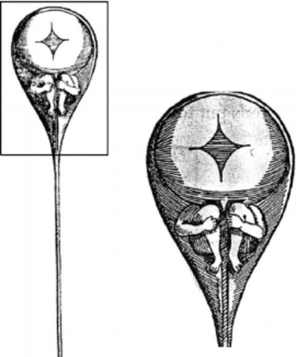 Spermatozoidas