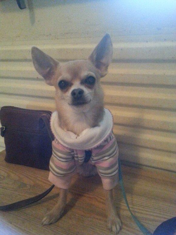 Kairėnuose dingo mažas šunelis