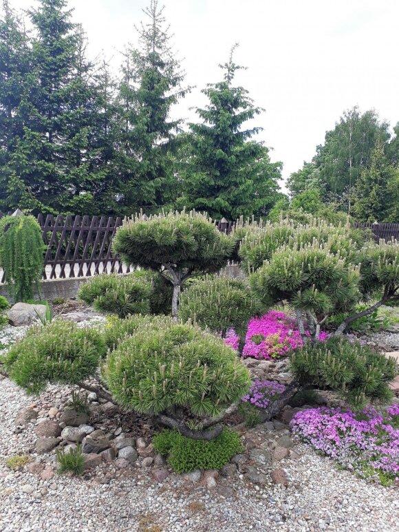 """<span style=""""color: #ff0000;"""">Skaitytojos patirtis:</span> darni akmenų ir augalų kompozicija sode"""